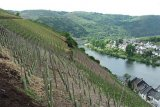 Small_mosel