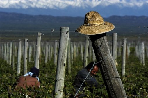 Large_argentina_vineyard